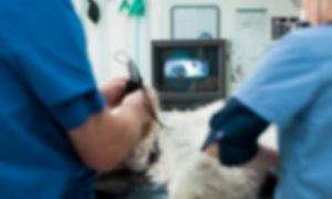 Veterinary Specialists Channel Highway Animal Hospital